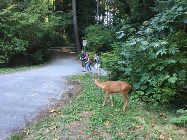 động vật hoang dã tại công viên stanley