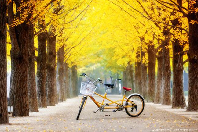 thuê xe đạp trên đảo nami