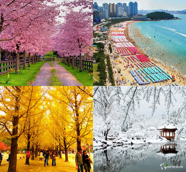 thời tiết 4 mùa tại hàn quốc