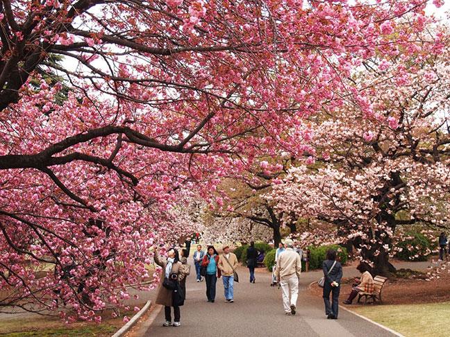 mùa xuân tại hàn quốc