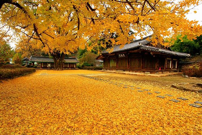 mùa thu là mùa du lịch hàn quốc đẹp nhất