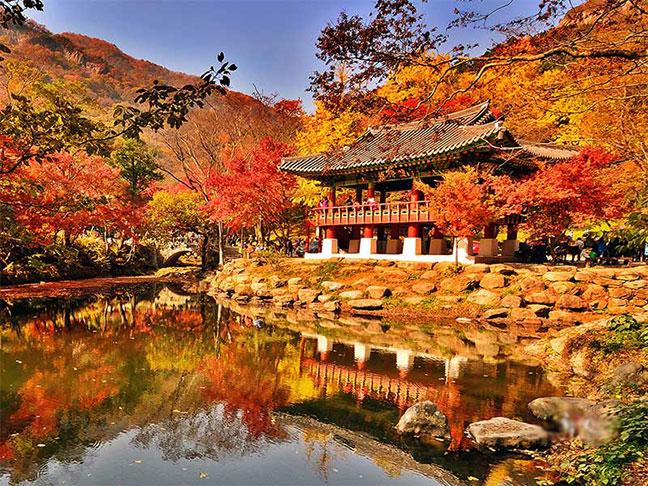 mùa thu tại hàn quốc