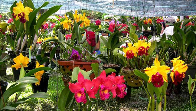 khu vực trồng lan tại vườn hoa thành phố