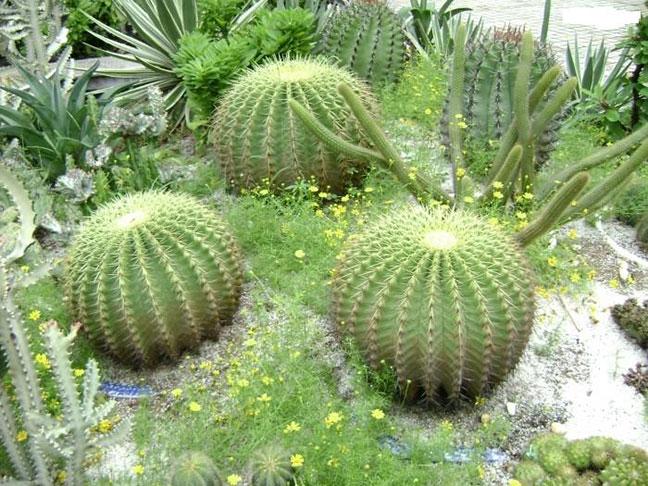 vườn trông xương rồng tại đà lạt