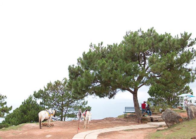 vẻ đẹp núi langbiang đà lạt